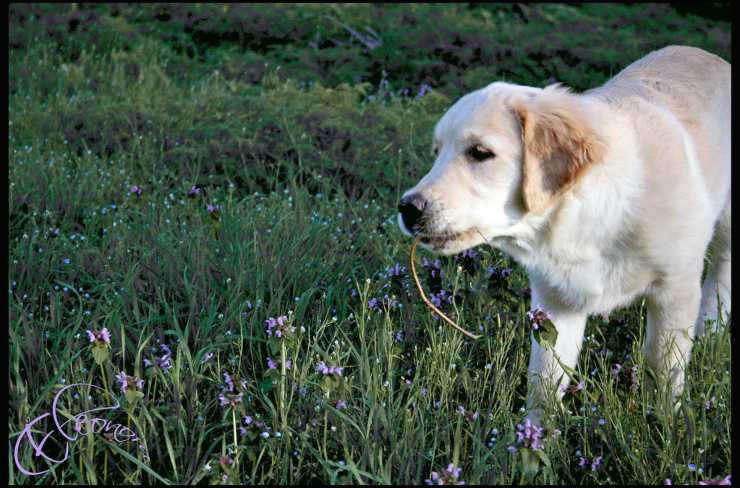 Punture di insetti nel cane: come comportarsi e quali rischi ci sono