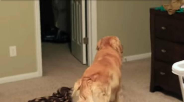 Il cane che aspetta la padrona (Foto video)