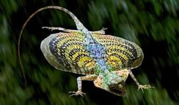 Un altro tipo di drago volante (Foto Facebook)