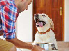 Perché il cane mangia velocemente?