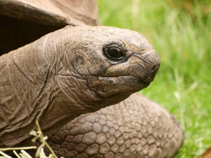 Estate con la tartaruga: come farle vivere al meglio la stagione calda
