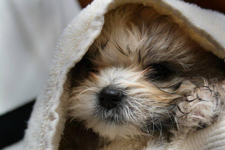 lavare il cane in casa (Foto Flickr)