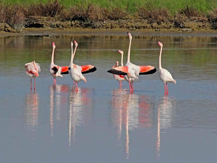 fenicotteri uccelli rosa