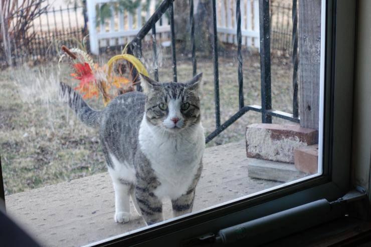 gatto e porte chiuse miagola uscire