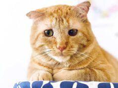 Il gatto randagio (Foto Instagram)