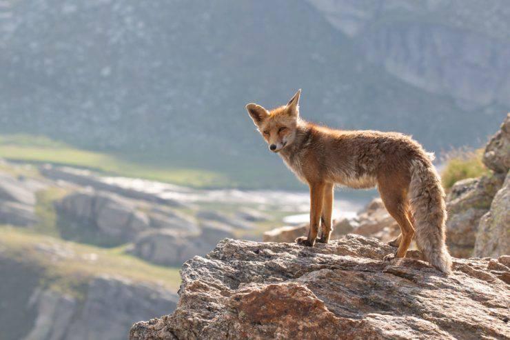 Abilità nascoste di animali comuni: quello che gli scienziati hanno scoperto
