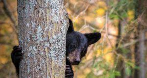 Storie di animali feroci che li rendono ancora più terrificanti