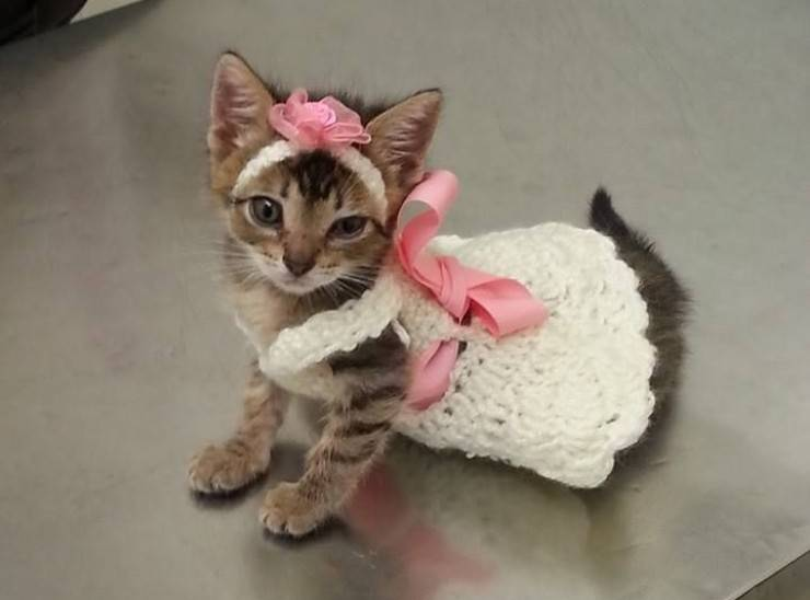 Vestire il gatto