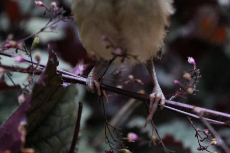 Le zampe degli uccelli: come funzionano queste meraviglie della natura