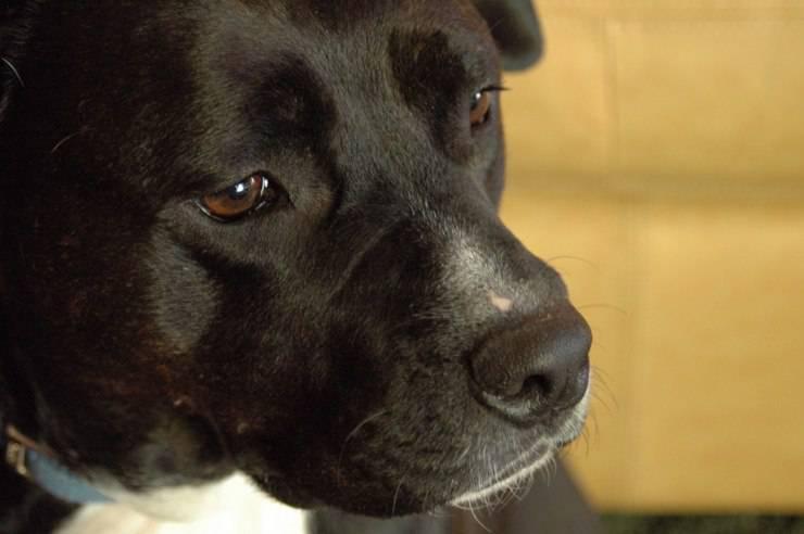 Gruppi sanguigni del cane: quali sono, come capire di quale gruppo è Fido