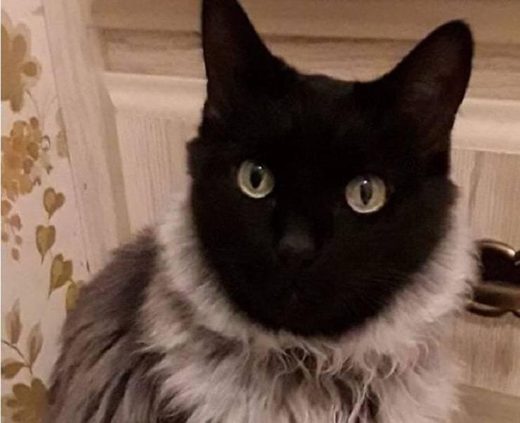"""gatto con """"maglione"""""""