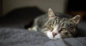 5 Malattie rare dei gatti