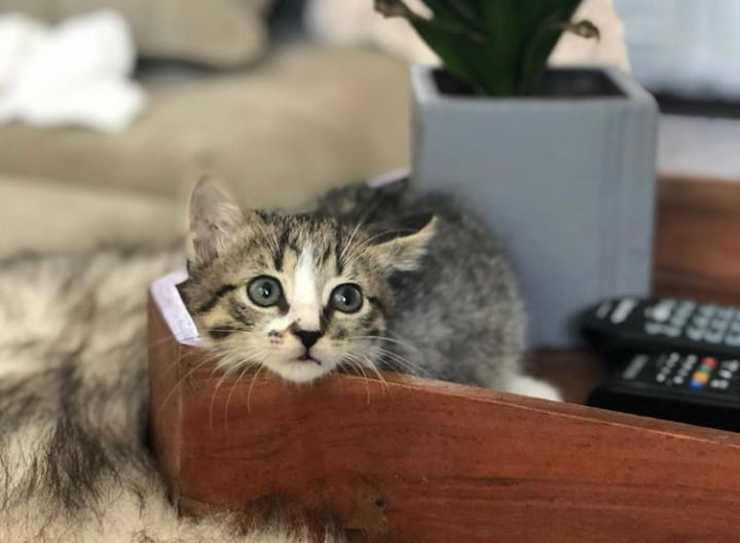 Il gatto tenerone (Foto Instagram)