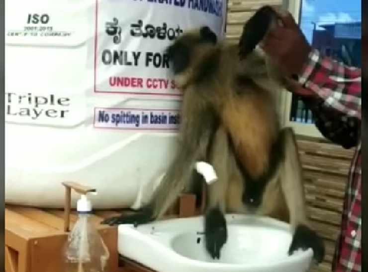 La scimmia nel lavandino (Foto video)