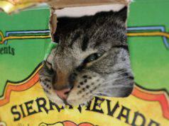 Perché il gatto mangia la colla, la plastica o il nastro adesivo?