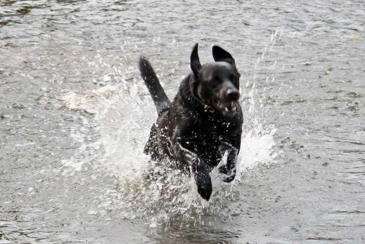 Intossicazione da acqua nel cane: come riconoscerla e intervenire