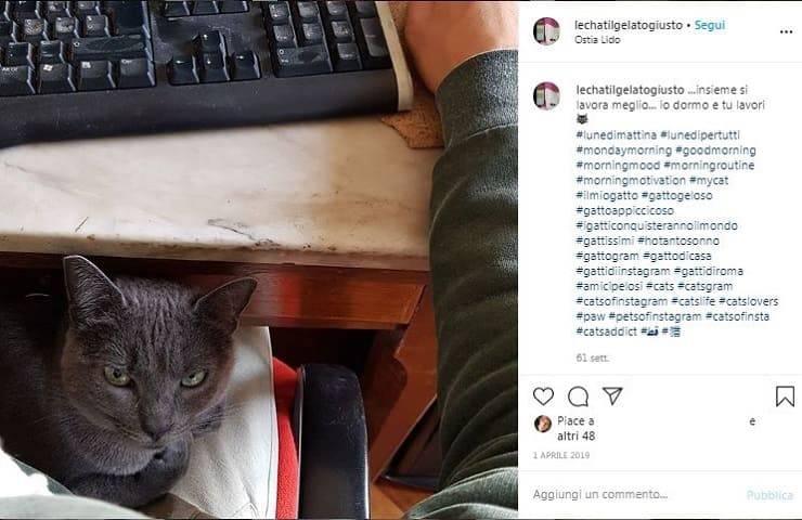 gatto pc lavoro