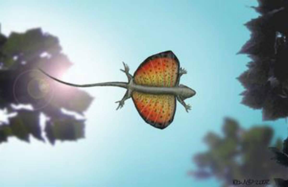 L'immagine del drago volante (Foto Facebook)