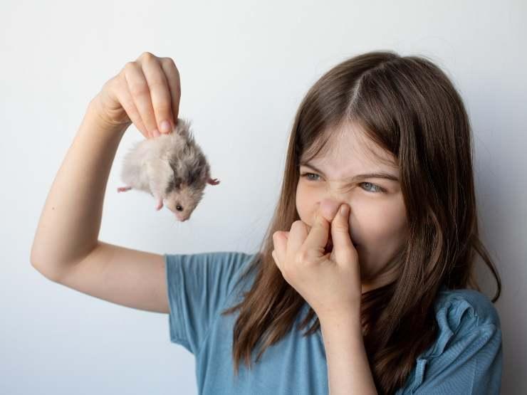 7 miti da sfatare sul criceto