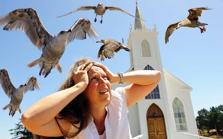 Paura degli uccelli
