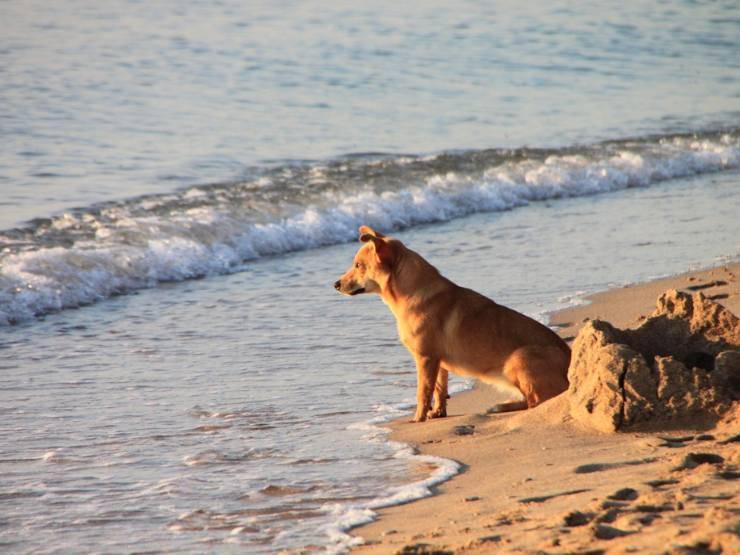 Protezione solare al cane: quando diventa necessaria e come applicarla