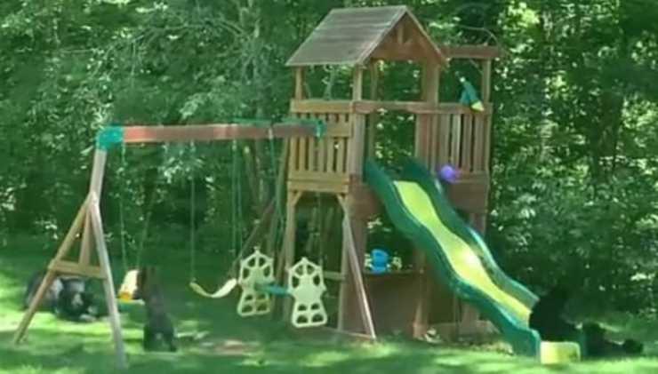 Gli orsi nel giardino (Foto video)