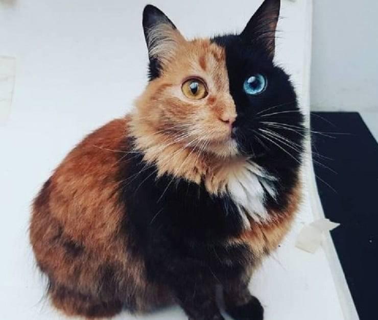 gatto colorato