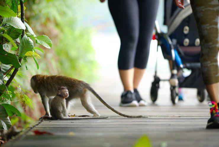 Scimmie e umani: più simili di quanto pensiamo