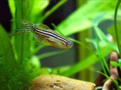 malattie e infezioni dei pesci