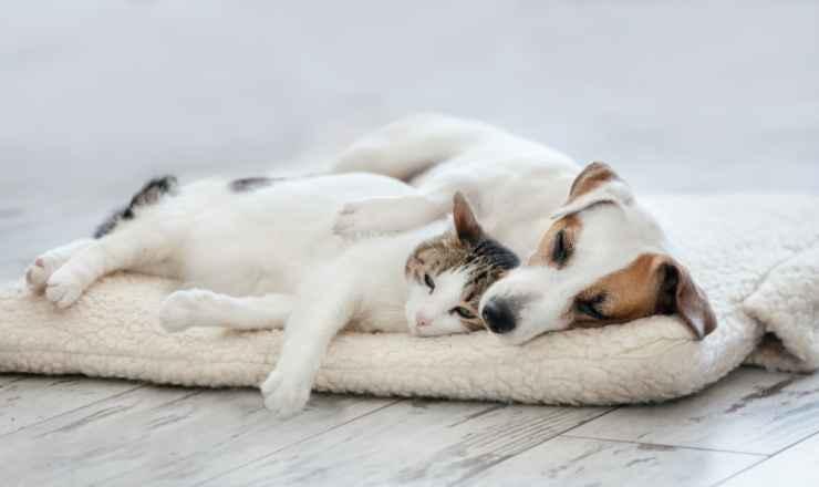Un'amicizia rara (Foto Adobestock)