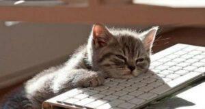 Le domande sui gatti che avete sempre temuto di chiedere al veterinario