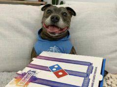 Il pitbull felice (Foto Twitter)