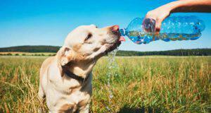 proteggere cane caldo