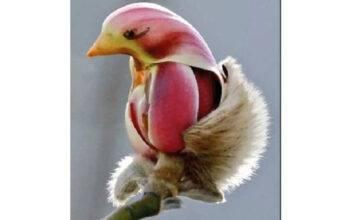 Il fiore - uccello