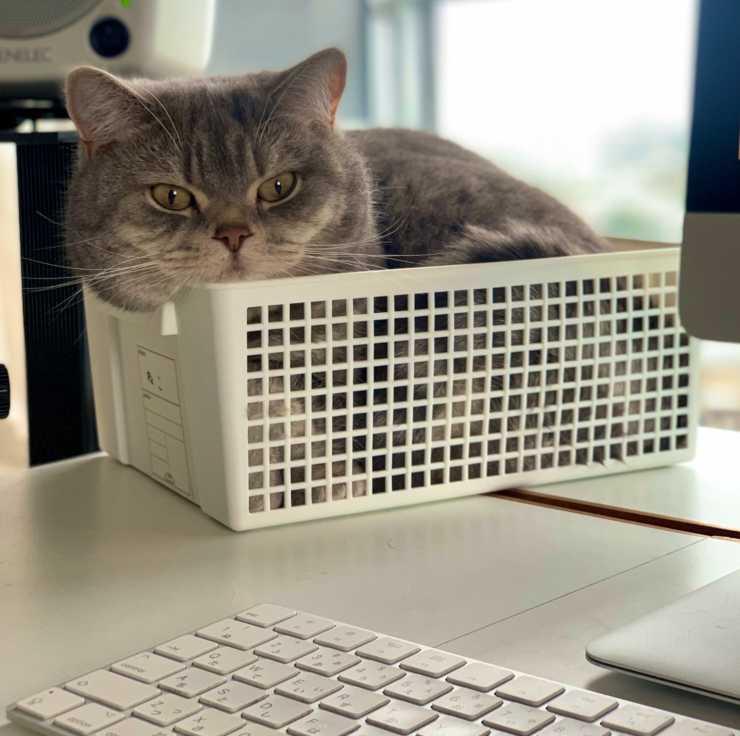mette gatto scatola