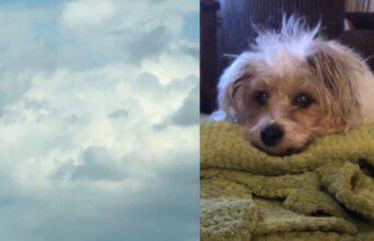 muso cane nuvole