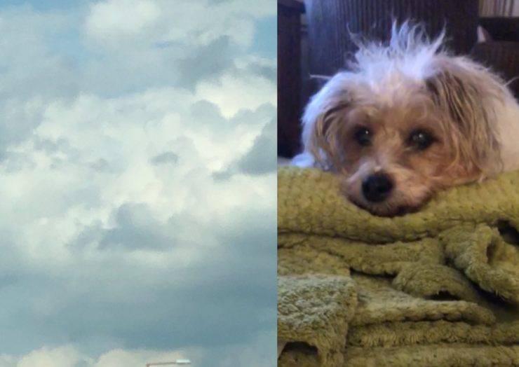 cane muso nuvole