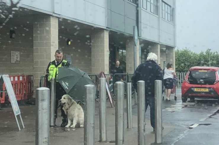 Il cane sotto la pioggia Facebook
