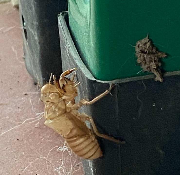 trova muta insetto