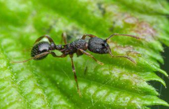 L'esoscheletro degli insetti: la formica