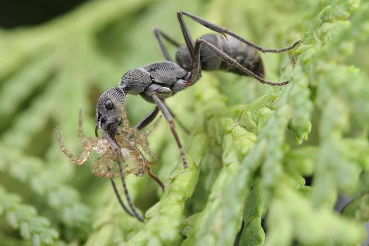 formica ragno esoscheletro insetti