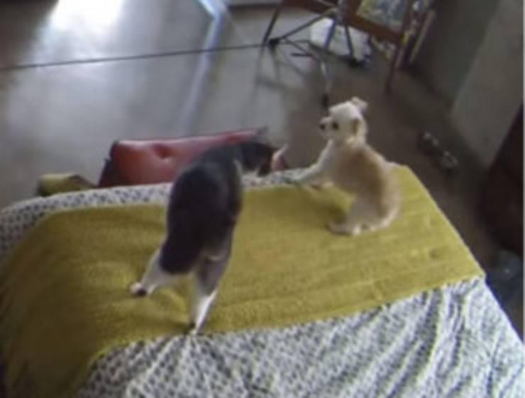 Gatto cane non abbaiare