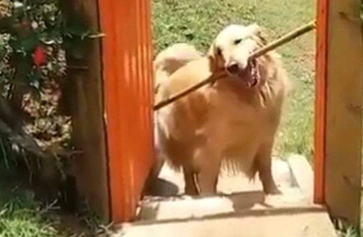 Cane rimane incastrato bastone