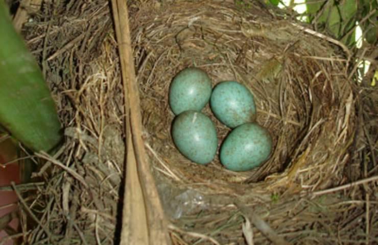 benedetta parodi uova azzurre