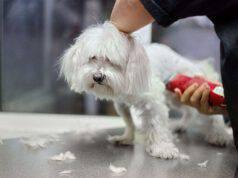 Perchè non si dovrebbe tosare il cane d'estate: pro e contro