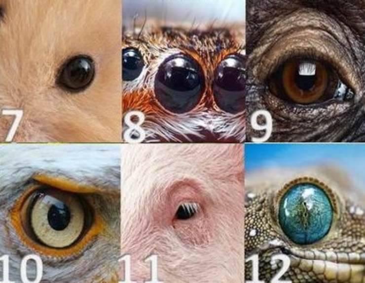 quiz occhi animali