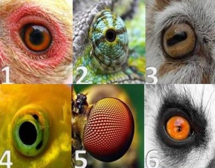 test occhi animali
