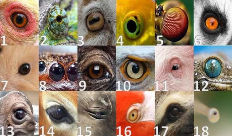 test famiglia occhi animali