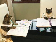 gatti vanno a scuola