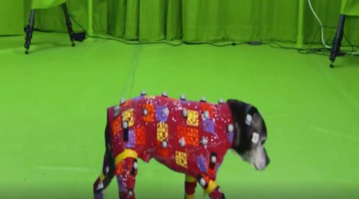 Arriva motion capture animali